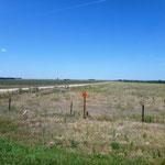 Mais- und Sojafelder verschwinden zunehmend