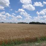Weizenfelder so weit das Auge reicht