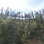Landwirtschaft im Steilhang