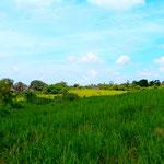 Zurück in Ubud