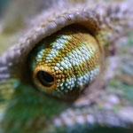 Darwins Auge