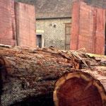 bois de séquoia en billes et débité, debout