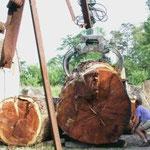 billes de séquoia de la région touraine, arrivées à Launay