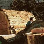 billes de séquoia, diamètre 1m80, à Launay