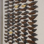 Zapfenschuppen, Nahaufnahme