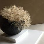 Wiesenbocksbart-Samen in Papierschale, Höhe ca 15cm
