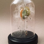 Samenstand unter Glas, Höhe 17cm