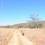 Ⓒ Big 5 Conservation & Research Project with Africa Volunteer Adventures in South Africa