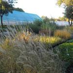 Stigla je jesen - prekrasne boje ukrasnih trava