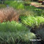 Ukrasne trave u drugoj dredici