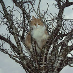 P'tit Loup, 12 ans, est un chat très bavard et râleur