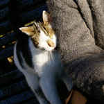 Winston, le chat qui n'aimait que moi
