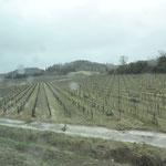 カルカッソンヌ城壁に向かう やはり一面のブドウ畑