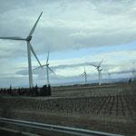 風車と一面のブドウ畑