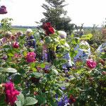 Rosengarten von Gretchen Bartel