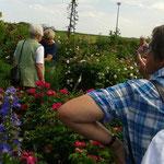 Rosengarten von Frau Bartel