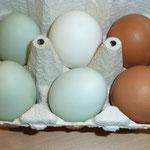 Es gibt grüne, braune und weiße Eier.