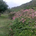 Naturparadies Hammam-Bourguiba Nordtunesien