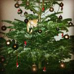19.12.2013 X-mas cat