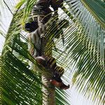 der Bubi holt uns welche direkt vom Baum ...