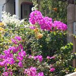 auf dem Weg in´s Dorf - hübsche Blumen