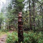 Wir wandeln im Trollwald