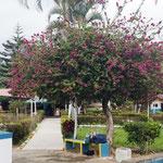 hübscher blühender Baum im Schwimmbad
