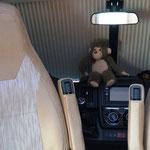 Affi und Baby-Bär haben immer einen guten Überblick