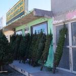Weihnachtsbaumverkauf! - sieht für uns komisch aus bei 30 Grad.