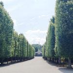 von überall im schön angelegten Park bieten sich wunderbare Aussichten