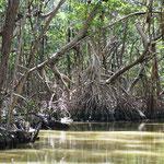 Und nun ab, in den Mangrovenwald