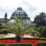 gläsernes Palmenhaus