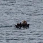 wieder ein lustiger Otter