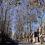 lustige Bäume, allerdings machen die Wurzeln den gesamten Gehweg kaputt