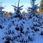 wir wandern durch den Winterwald