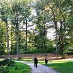 aber es gibt einen hübschen Park mit gesunden Bäumen.