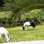 auch die beiden Pferdchen leben hier