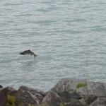 fliegende Fische - 3 Meter neben den Anglern