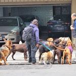 man sieht hier keine Kindergruppen - aber Hundegruppen!!!