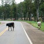 110 km/h darf man auf dieser Strasse fahren - sollte man lieber nicht tun