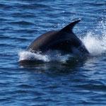 und die Delphine tanzen um uns rum