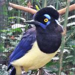 wunderschöne Vögel