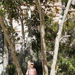 Bäume in Tarnoptik
