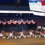 6 Pferde-Gespann