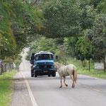 und hier die stark genutzte Strasse, Pferd legt sich mit LKW an