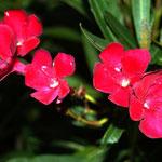 ordentlich gepflegte Blumen