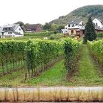 natürlich Weinanbaugebiet an der Mosel