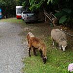 und hier leben auch Schafe, Ziegen, Hühner, Hunde und Katzen