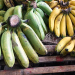links die Kochbananen (sind aber auch oft gelb) rechts die normalen Bananen, kleiner aber zuckersüß!