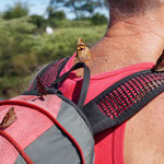 Bernd hat schwere Last auf dem Rücken - Schmetterdinger überall